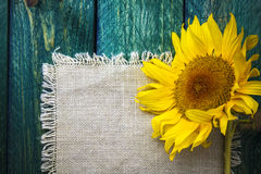 Art background summer floral flower vintage sunflower Stock Photography