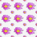 Art background wallpaper texture with Pink flower Royalty Free Stock Photography