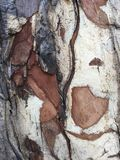 An art of a bark on a tree. A random art of a bark on a tree with natural colors stock photos