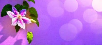 Art beatiful summer floral background frame Royalty Free Stock Image