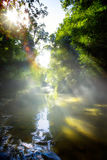 Art beautifu landscape with morning tropical River in jungle Stock Photos