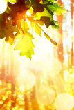 Art Beautiful autumn background with  leaves Royalty Free Stock Photo