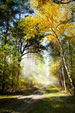 Art Beautiful morning in autumn forest Stock Photo