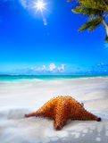 Art Beautiful sea  beach on a Caribbean island Royalty Free Stock Photography