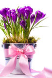 Art Beautiful spring flowers Royalty Free Stock Photo
