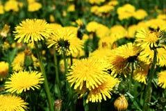 Art Beautiful spring flowers yellow background Stock Photos