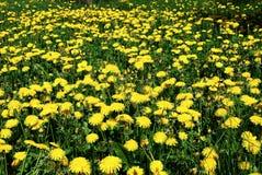 Art Beautiful spring flowers yellow background Royalty Free Stock Photo