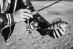 Art black and white photography. Fisherman holding a bass in his hand and spinning the coil. Black and white art monochrome photography Royalty Free Stock Photo