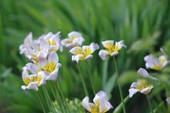Art blanc et jaune de fleur en premier ressort photographie stock