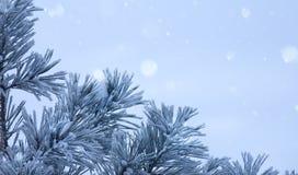Art blue Christmas tree. Art blue snowy Christmas tree stock photo