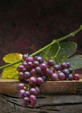 Art bunch  grapes with leaves on dark background Royalty Free Stock Photography