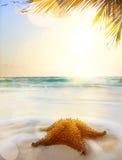 Art caribbean beach. In sunset time Stock Image