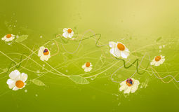 Art chamomile. Figure daisies, spray and creative elements on a green background Stock Photography