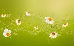 Art chamomile Stock Photography