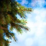 Art Christmas tree branch on a blue background Stock Photos