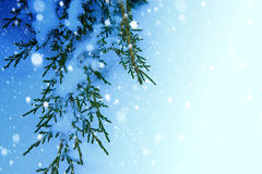 Art Christmas tree on snow  background Royalty Free Stock Image