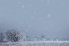 Art christmas winter background. Snowy landscape royalty free stock photo