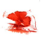 Art The claret watercolor ink paint blob Royalty Free Stock Photography