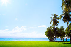 Art Coconut gömma i handflatan på tropisk golfbana på det karibiska havet Arkivbild