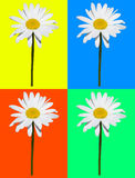 Art composition, daisy isolated in four colored background Stock Image