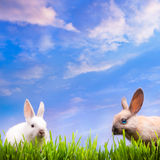 Art couple  little Easter rabbits  on green grass Royalty Free Stock Photo