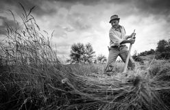 The art of cutting hay by hand. Picture taken of an old man cutting hay by hand Transylvania Romania Stock Photo