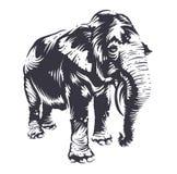 Art d'éléphant de vecteur Images stock