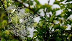 Art d'araignée Photographie stock libre de droits