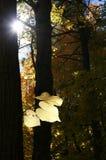 Art d'automne Images libres de droits