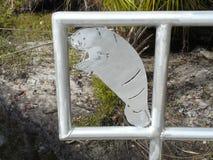 Art de lamantin sur la porte aux ressorts Images libres de droits