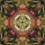 MANDALA FLOWER ART DECO OLIVE, WITH ABSTRACT BACKGROUND IN GREENS , CENTRAL FLOWER IN VICTORIAN PINK, DECORATIVE IMAGE stock photos