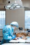 Art dentaire v?t?rinaire Le v?t?rinaire de chirurgien de dentiste nettoie et traite les dents de chien sous l'anesth?sie sur la t images libres de droits