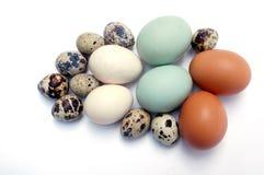 Art der Eier Lizenzfreie Stockfotos