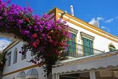 Art der Kanarischen Insel Stockbild