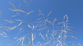 Art des Grases, des Sonnenscheins und des blauen Himmels Stockbild