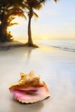 Art Dream Sea Shell Lizenzfreies Stockfoto