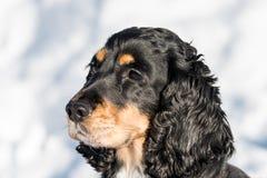 Art du portrait de chien mignon avec la neige à l'arrière-plan Photos stock