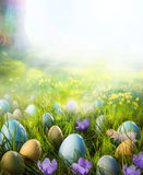 Art Easter eggs on meadow with daffodil flower Stock Image