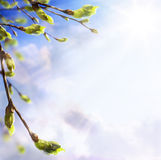 Art easters background of the young spring leaves Royalty Free Stock Image