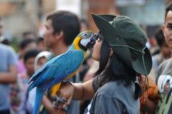Art Festival a Yogyakarta, Indonesia Fotografia Stock Libera da Diritti