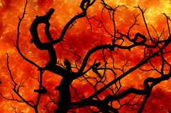 Art fire burning dry tree. Illustration background Stock Images