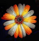 Art floral images libres de droits