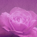 Art floral background with rose flower Royalty Free Stock Photos