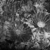 Art floral graphic background Royalty Free Stock Photography