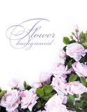 Art flower Background for greeting card Stock Photography