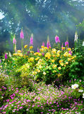 Art flowers in the morning in an English park Royalty Free Stock Image