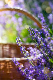 Art flowers of Provence Stock Photos