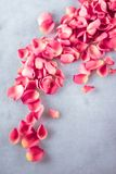 Rose petals on marble stone, floral background. Art of flowers, wedding invitation and nature beauty concept - Rose petals on marble stone, floral background stock photo