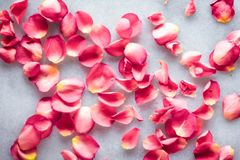 Rose petals on marble stone, floral background. Art of flowers, wedding invitation and nature beauty concept - Rose petals on marble stone, floral background royalty free stock photos