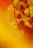 Art. Fogli dell'ultimo su una betulla. Immagine Stock